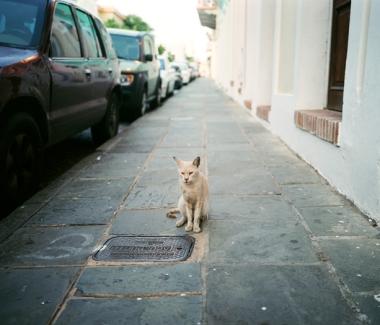 gato, old san juan puerto rico, 2009